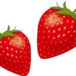 イチゴ狩りの美味しい時期に見分け方やそのまま食べる?